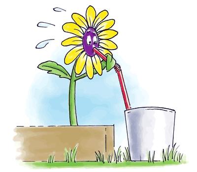 использование дождевой воды для полива